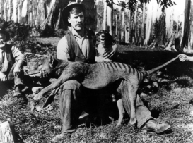 The Tasmanian tiger. exterminated by European settlers who exterminated the Tasmanian people too. One small episode in the evolution of mankind. Image source.